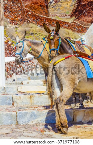 Greece Santorini island, beautiful donkeys in the streets of Santorini - stock photo