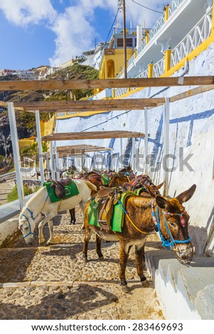 Greece Santorini island donkey, donkeys are used  to transport tourists in the island