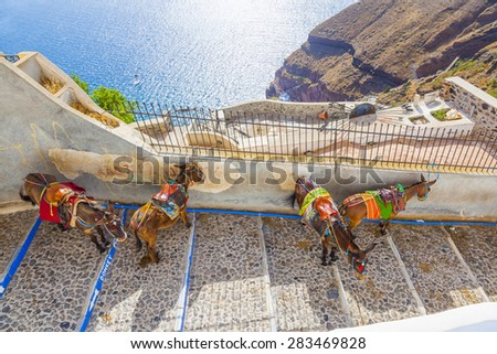 Greece Santorini island donkey, donkeys are used  to transport tourists in the island - stock photo