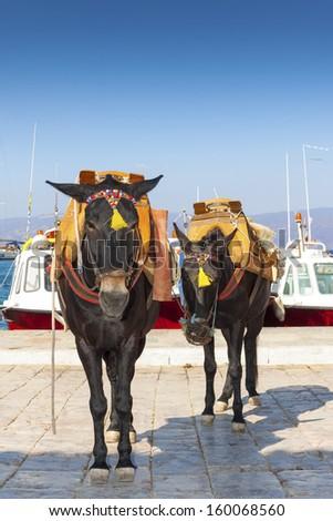 Greece Santorini island, donkey posing by the sea at main harbor - stock photo
