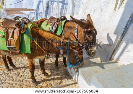 Greece Santorini island in Cyclades, Donkeys waiting for tourists for a ride under fyra