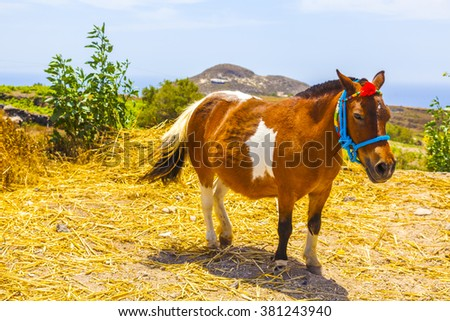 Greece Santorini, pony for transfering tourist in bright colors - stock photo
