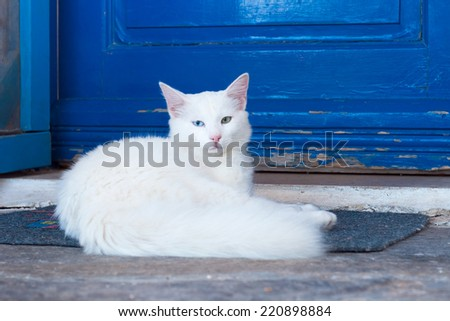 Greek cats - beautiful white cat sitting on the entrance to the house - stock photo