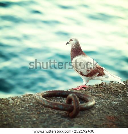 Greek dove on the promenade in Crete, impressions of Greece - stock photo