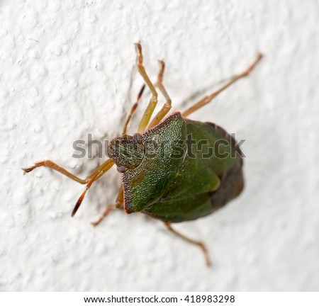 green a bedbug crawling on the white wall of the house - stock photo