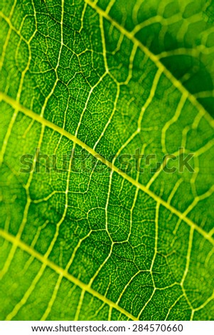 Green, abstract composition with leaf texture