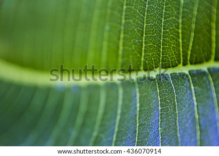 Green abstract leaf - stock photo