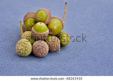 green acorns on blue background - stock photo