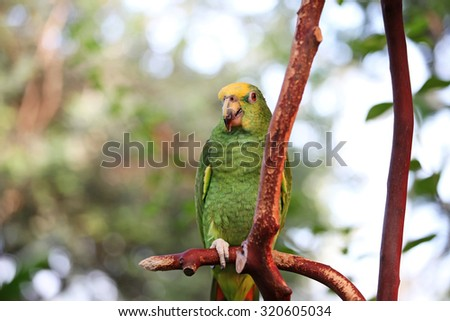 Green African parrot in the jungle - stock photo
