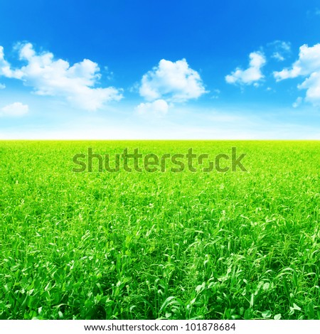 Green agricultural field and blue sky with clouds. - stock photo