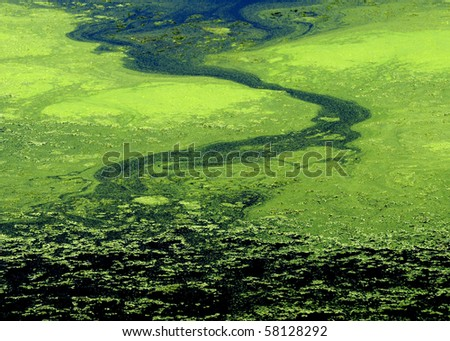 Green algae abstract