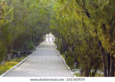 Green alley in the perspective - stock photo