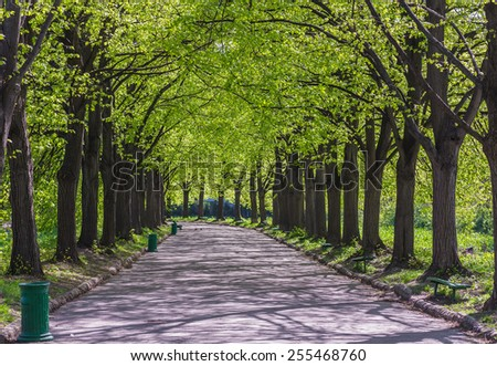 Green alley with trees in the park - stock photo