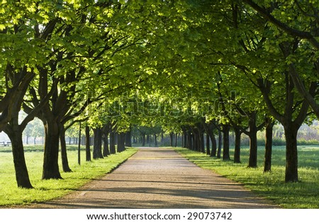 Green alley with trees in the park