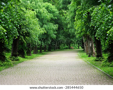 Green alley with trees in the summer park - stock photo