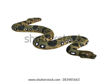 Green anaconda or Eunectes murinus or common anaconda orwater boa isolated on white background