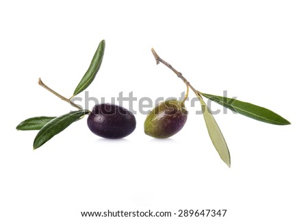 Green and black olives with leaves on its branch to make olive oil