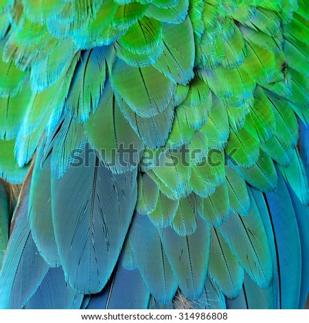 Green and Blue background of Great Green Macaw or Buffon's macaw bird's feathers, the fine green and blue texture - stock photo