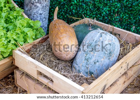 Green and brown winter melon in a wooden box with vegetables still life background - stock photo