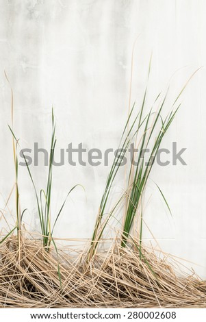 green and death dry hay - stock photo