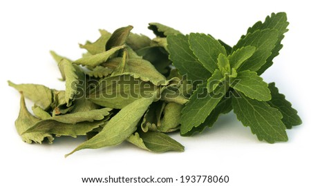 Green and dired Stevia leaves over white background - stock photo