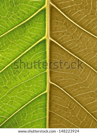 green and dry leaf  - stock photo