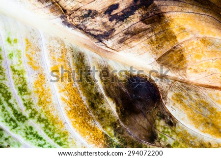 Green and dry leaf. - stock photo