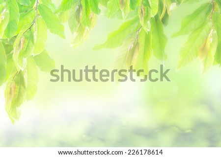 Green and fresh nature background.