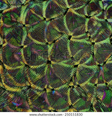 Green and Gold Background Texture made of Green Peacock Bird's Feathers - stock photo