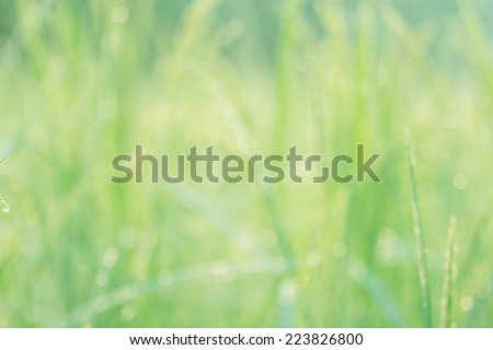 green and light green blur background - stock photo