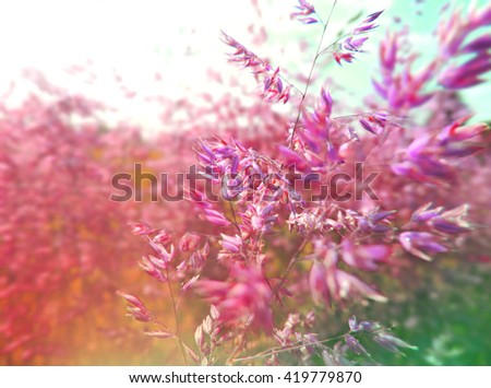 Green and pink grass on a spring meadow. Field with selective focus on the foreground. nature background.  - stock photo