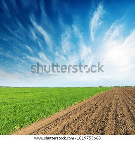 green and plowed fields and sunset in blue sky