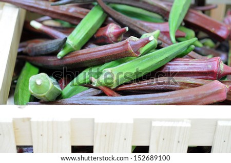 green and purple okra (abelmoschus) in wooden crate
