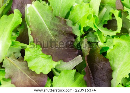 Green and red leaf of lettuce close up. Isolated on a white background.  - stock photo