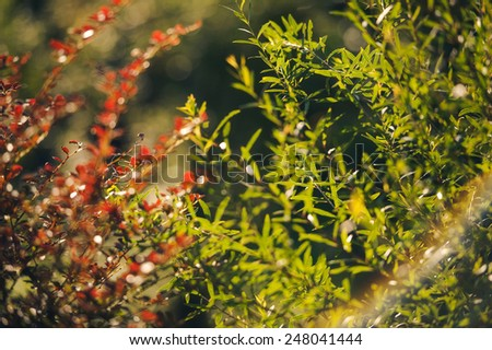 green and red leaves in the sunlight and rainbow, summer - stock photo