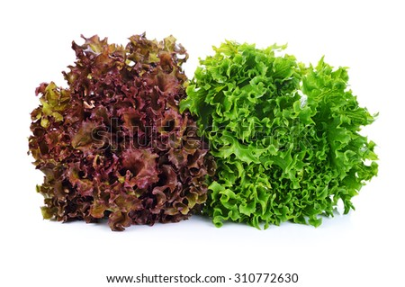 green and red lettuce isolated on white background - stock photo