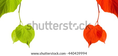 Green and red linden-tree twigs isolated on white background with copy space - stock photo