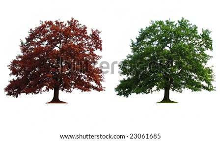 green and red old oak trees isolated over white
