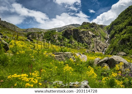 Green and yellow alpine blooming meadow and steep stream on rocky ground. - stock photo