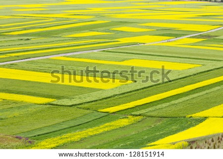 Green and yellow field - stock photo