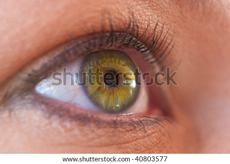 green and yellow iris human eye closeup iris only in focus