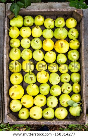 Green and yellow Pears in a box at a famers market may use as background, close up.