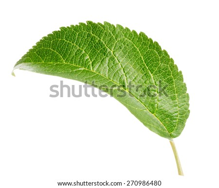 Green apple leaf Clipping Path - stock photo