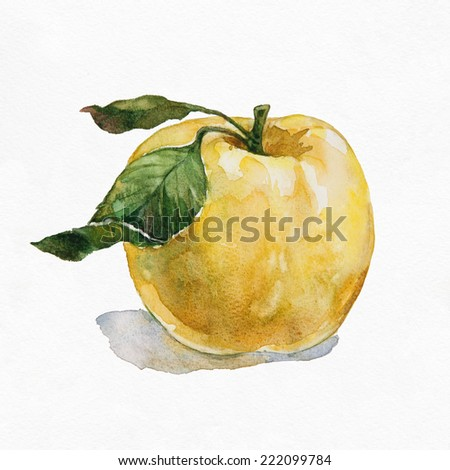 Green apple. Watercolor illustration on white background. - stock photo