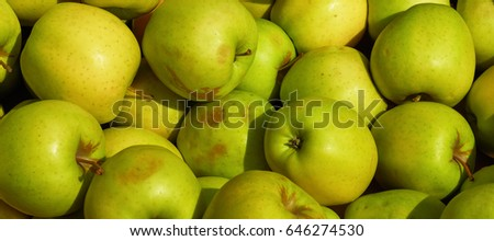 Green apples background on a bright sunny day