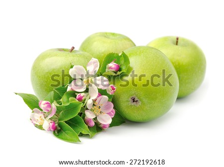 Green apples close up on white background .Blooming apple tree.