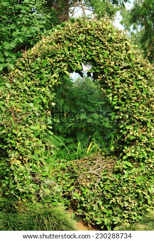 Green arch of leaves in park of Batumi, Georgia - stock photo