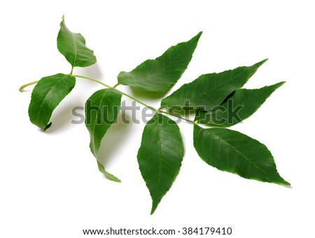 Green ash-tree leaves. Isolated on white background. - stock photo