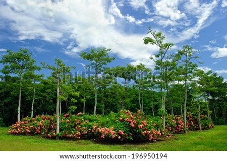 Green aspen trees and pinks rose bushes on grass. - stock photo