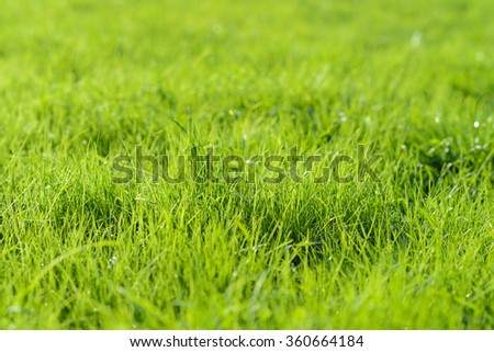 green background by fresh grass  - stock photo